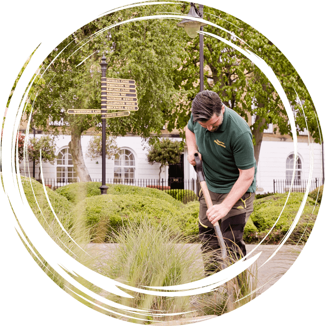 Limetree-Ground-Maintenance-Company-in-Surrey-12