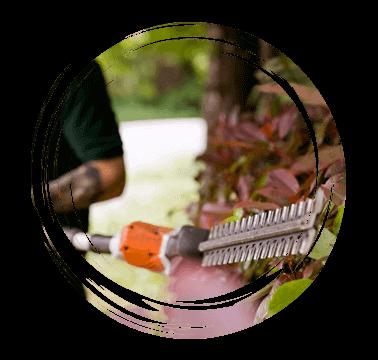 Limetree-Ground-Maintenance-Hedge-Trimming-Kent
