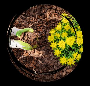 Limetree-Ground-Maintenance-Surrey-Flower-beds