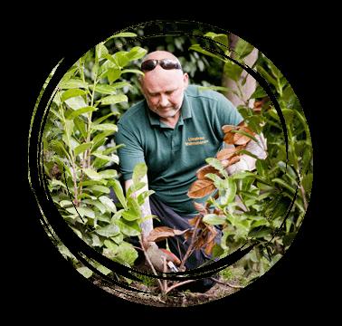 Limetree-Ground-Maintenance-Surrey-Pruning