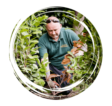 Limetree-Ground-Maintenance-Sussex-Pruning